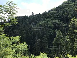 高尾山の写真・画像素材[1921503]