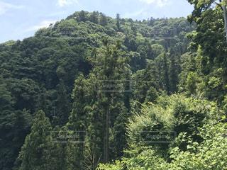 高尾山の写真・画像素材[1921506]