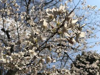 花の写真・画像素材[1959910]
