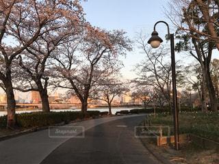 桜の写真・画像素材[2000538]