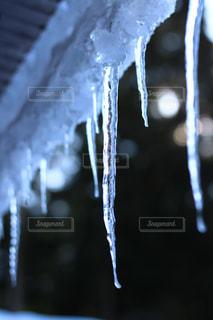 しんと冷えた朝にの写真・画像素材[1963470]