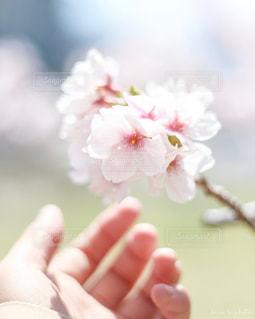 花のクローズアップの写真・画像素材[2142575]