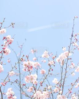 色とりどりの花のグループの写真・画像素材[2142617]