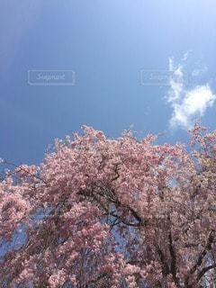お花畑の写真・画像素材[71483]