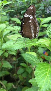 葉の上の蝶の写真・画像素材[1922570]