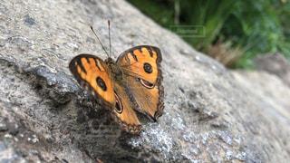 岩の上の蝶の写真・画像素材[1922572]