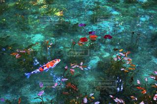 モネの池の写真・画像素材[2100303]