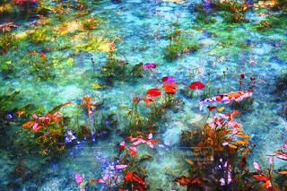 モネの池の写真・画像素材[2100304]