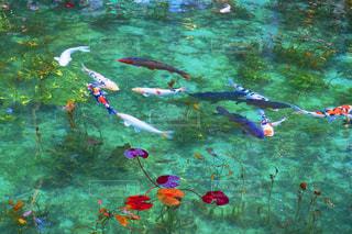 モネの池の写真・画像素材[2100306]