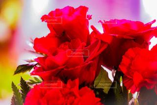 花のクローズアップの写真・画像素材[3057633]