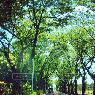 樹のトンネルの写真・画像素材[1923530]