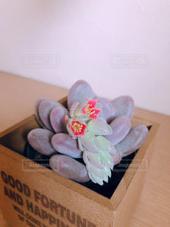 玄関を彩る多肉ちゃん ピンクの花咲いたの写真・画像素材[1929517]