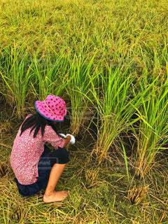 稲刈りをする女の子の写真・画像素材[1927234]