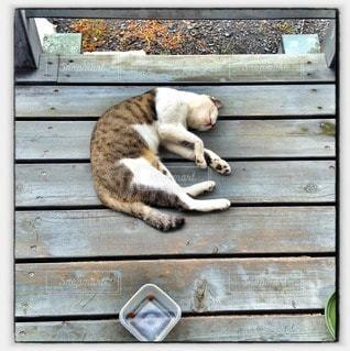 猫の写真・画像素材[71603]