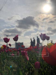 曇りの日にピンクの花のグループの写真・画像素材[1925831]