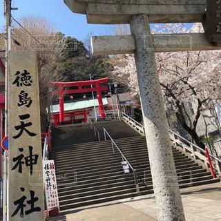 桜満開の眉山天神社の写真・画像素材[1927080]