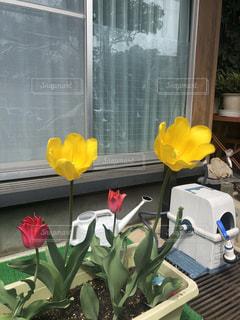 窓の前の椅子に座っている花の花瓶の写真・画像素材[2273502]