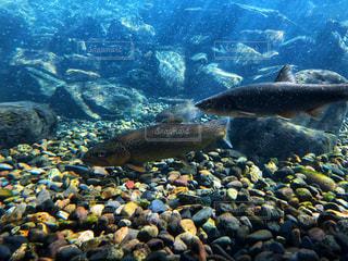 水中の魚たちの写真・画像素材[1959264]
