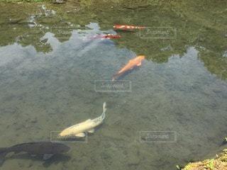 魚の写真・画像素材[71893]