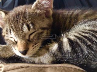 猫の写真・画像素材[1952036]