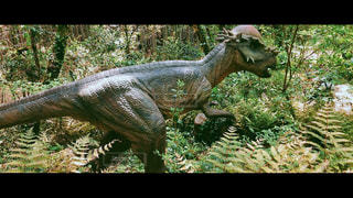 爬虫類の接写の写真・画像素材[2116435]
