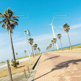静岡の海岸の写真・画像素材[2003428]