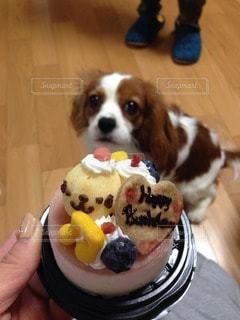 犬の写真・画像素材[72091]