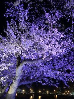 春の写真・画像素材[2012236]