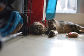 横になっている猫の写真・画像素材[1932298]