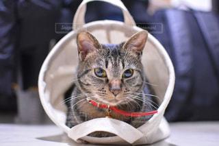 おさまる猫の写真・画像素材[1982500]