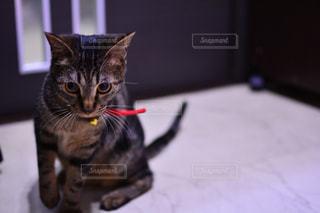 狙う猫の写真・画像素材[1983326]