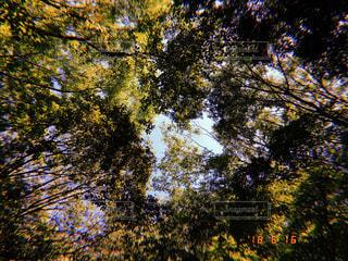 近くの木のアップの写真・画像素材[1932977]