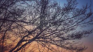 近くの木のアップの写真・画像素材[1939967]