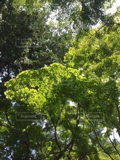 自然の写真・画像素材[73415]