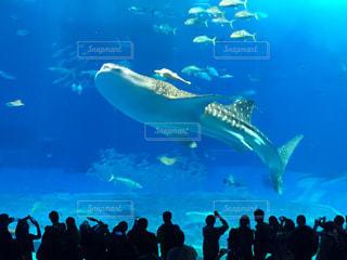 沖縄美ら海水族館とバック グラウンドで見て大群衆の水中ビューの写真・画像素材[1935259]
