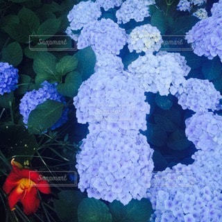 自然の写真・画像素材[72131]