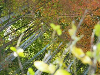 小人から見た竹の写真・画像素材[1944076]