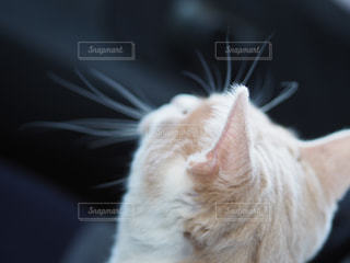 ネコの写真・画像素材[1958172]