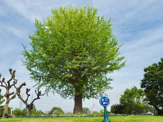 木の写真・画像素材[2090561]
