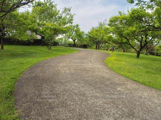 公園の小道の写真・画像素材[2090562]