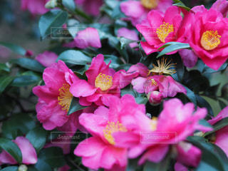 花のクローズアップの写真・画像素材[2101203]