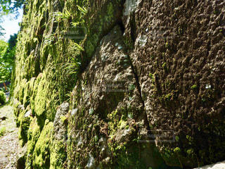 苔の写真・画像素材[2142357]