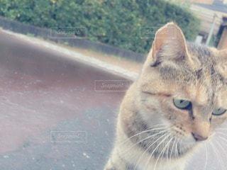 猫の写真・画像素材[14119]