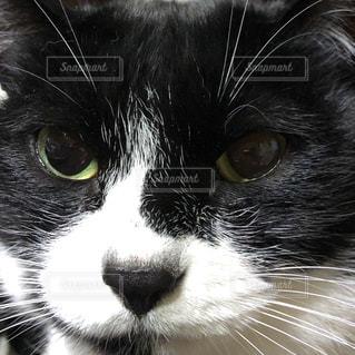 猫のアップの写真・画像素材[2078454]