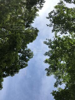 真上の空の写真・画像素材[2084174]
