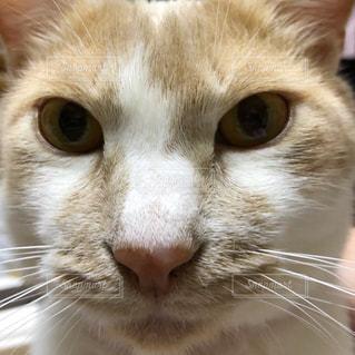 猫のアップの写真・画像素材[2084857]