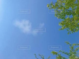 青空と新緑の写真・画像素材[2268988]