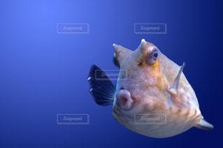 魚のクローズアップの写真・画像素材[2320342]