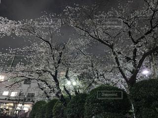 公園の写真・画像素材[1967858]