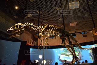 恐竜の骨の写真・画像素材[1939708]